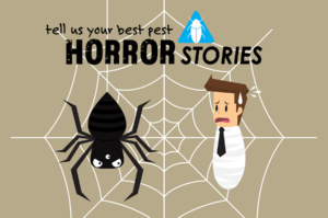 November Pest Horror Stories
